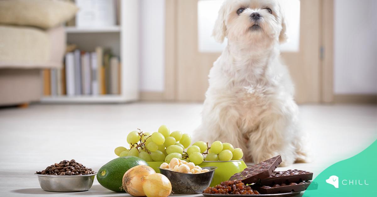 Кои храни са вредни за кучето и какво не трябва никога да му даваме?
