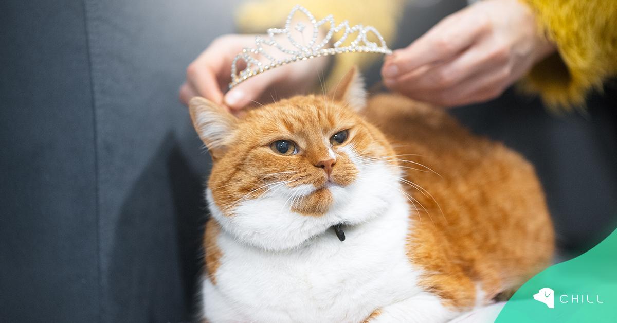 """Как се стигна до """"Нейно Величество Котката"""""""