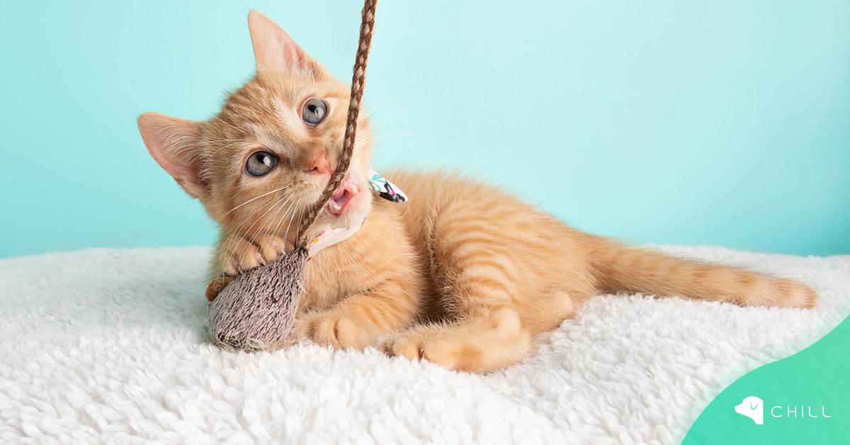 Как да направим сами играчки на котето?