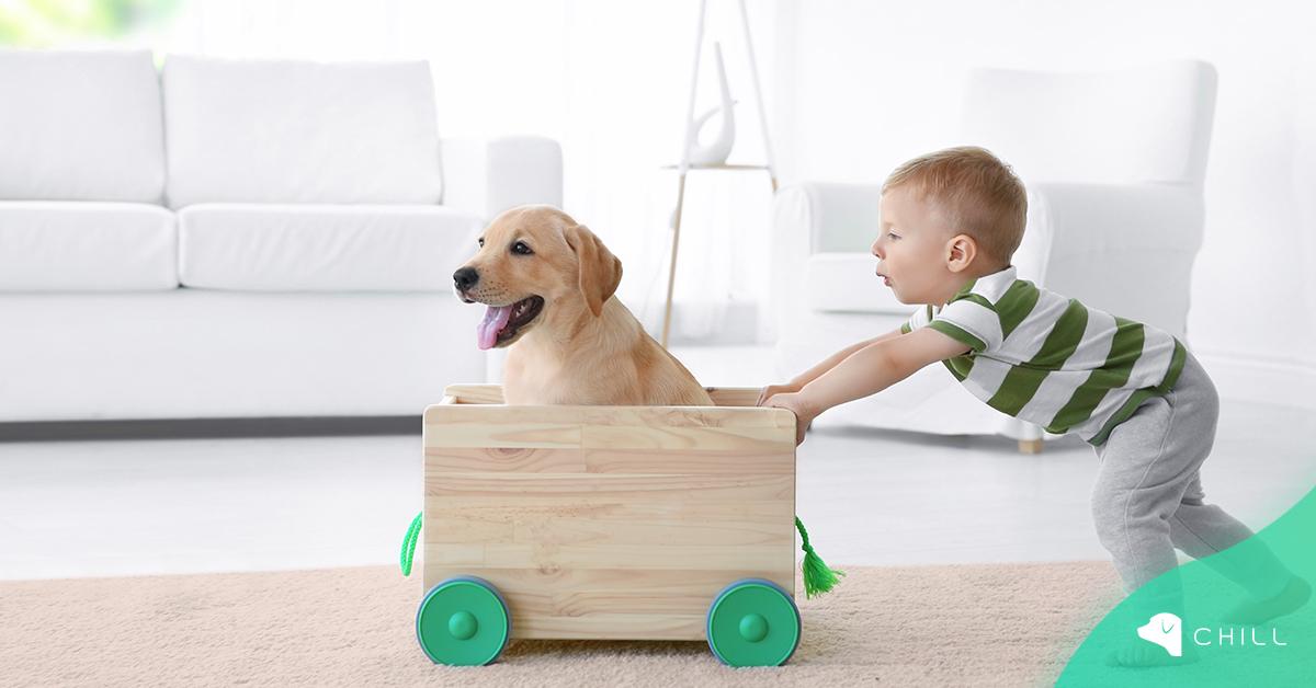 Правилата на доброто приятелство между Детето и Кучето