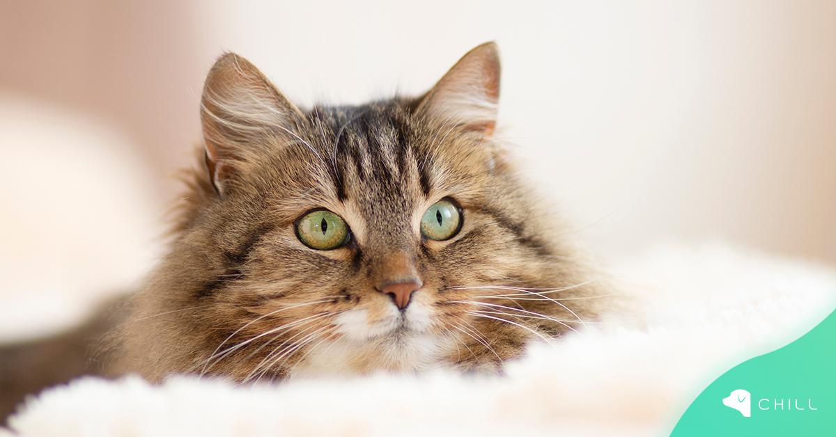 Защо не трябва да гледаме котката в очите?