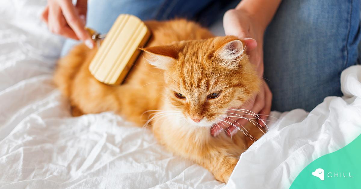 Груминг у дома – как да разресваме козината на котето?