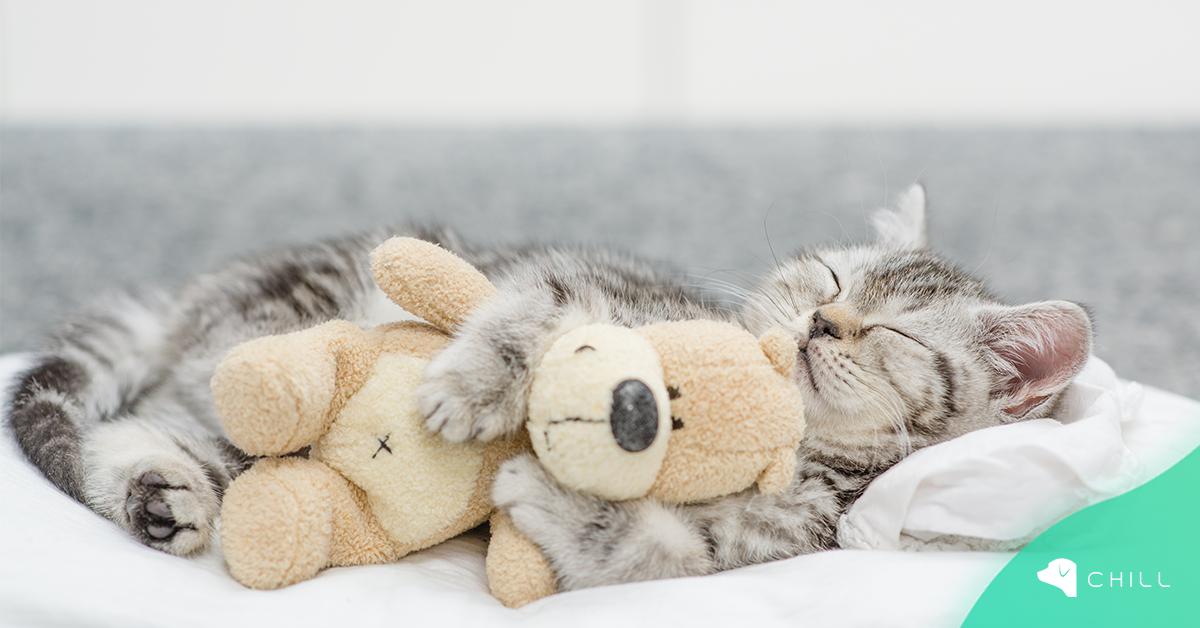 5 любопитни факта за съня на котката