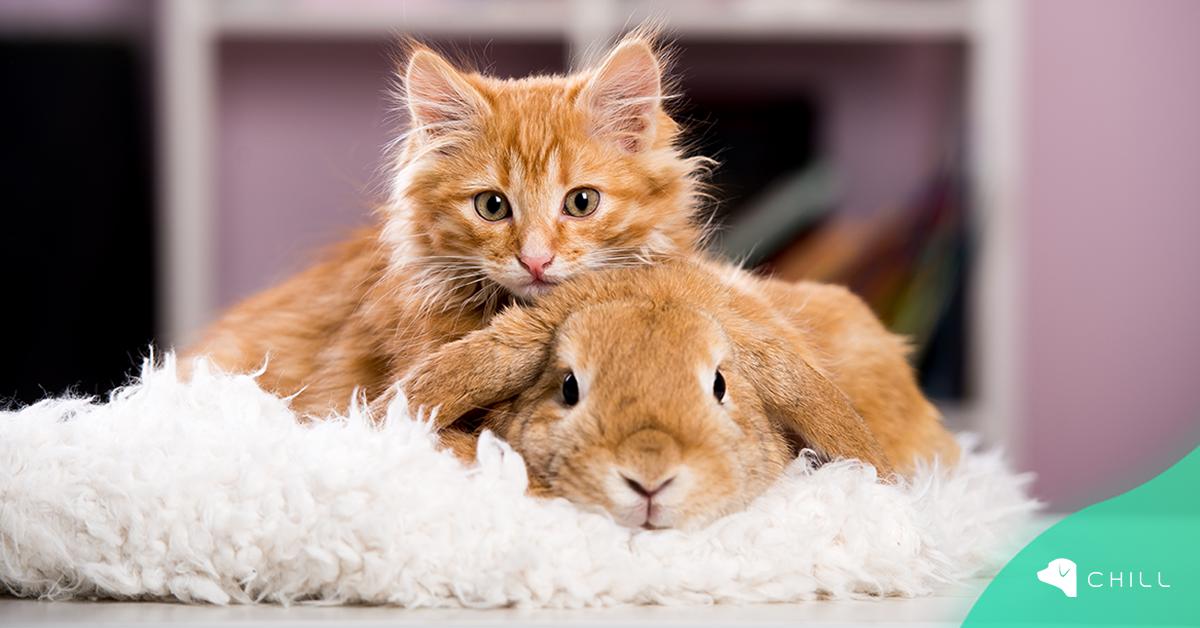Котенце, което се мисли за зайче, стана звезда в интернет