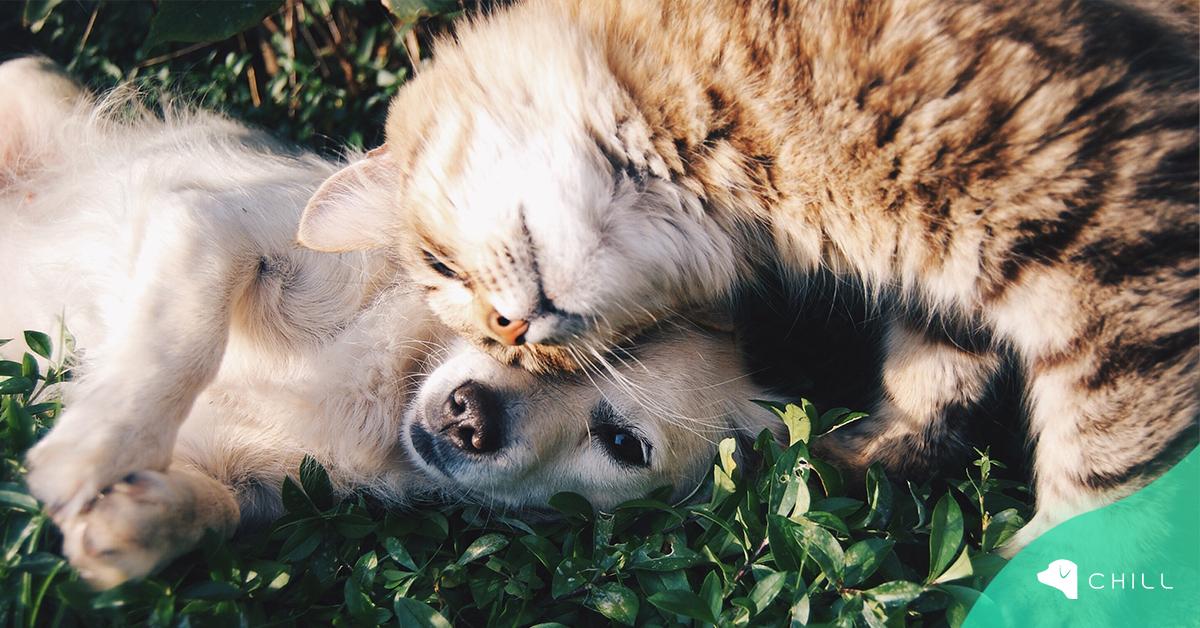 6 неща, които да направим, след като си вземем куче или коте