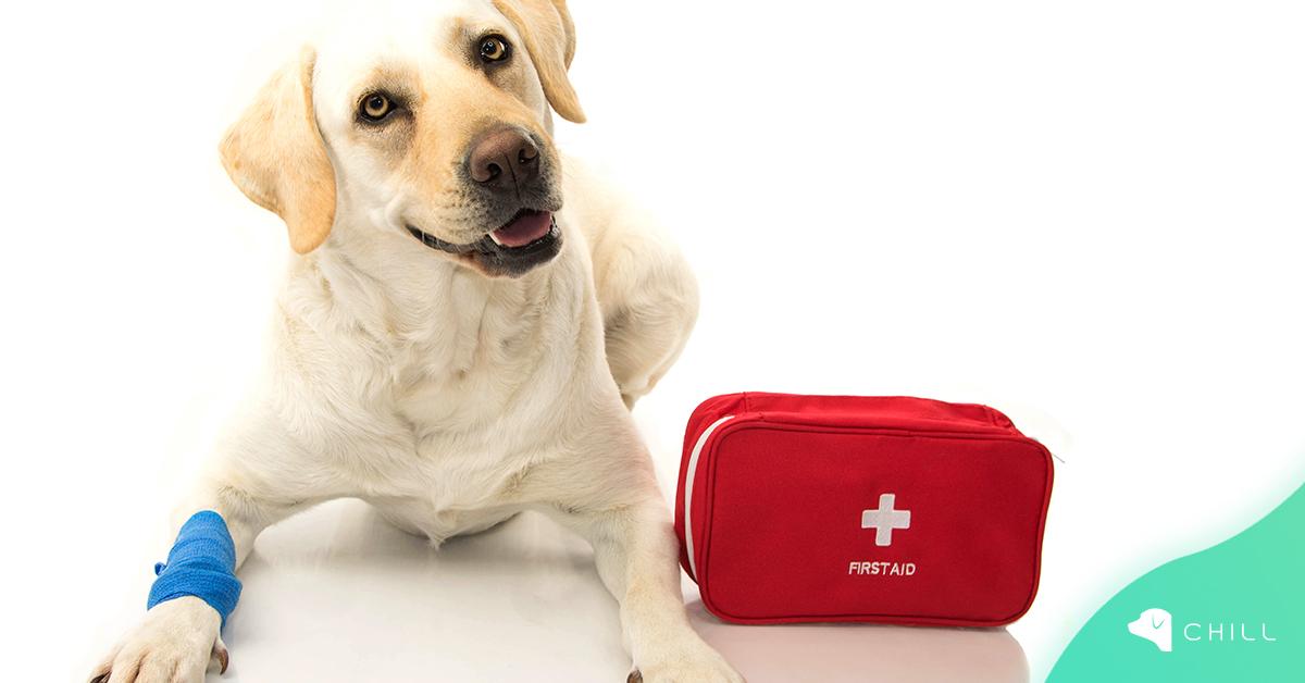 Необходима ли е домашна аптечка за кучето?