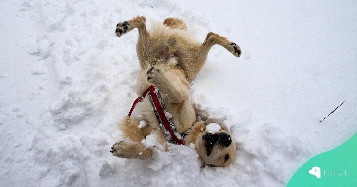 Кучето и зимата