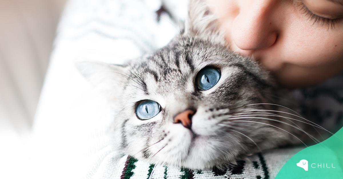 22 февруари в Япония е Ден на Котката