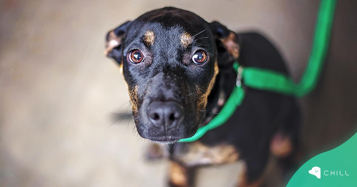 Какво да правим, когато кучето се страхува от улицата?