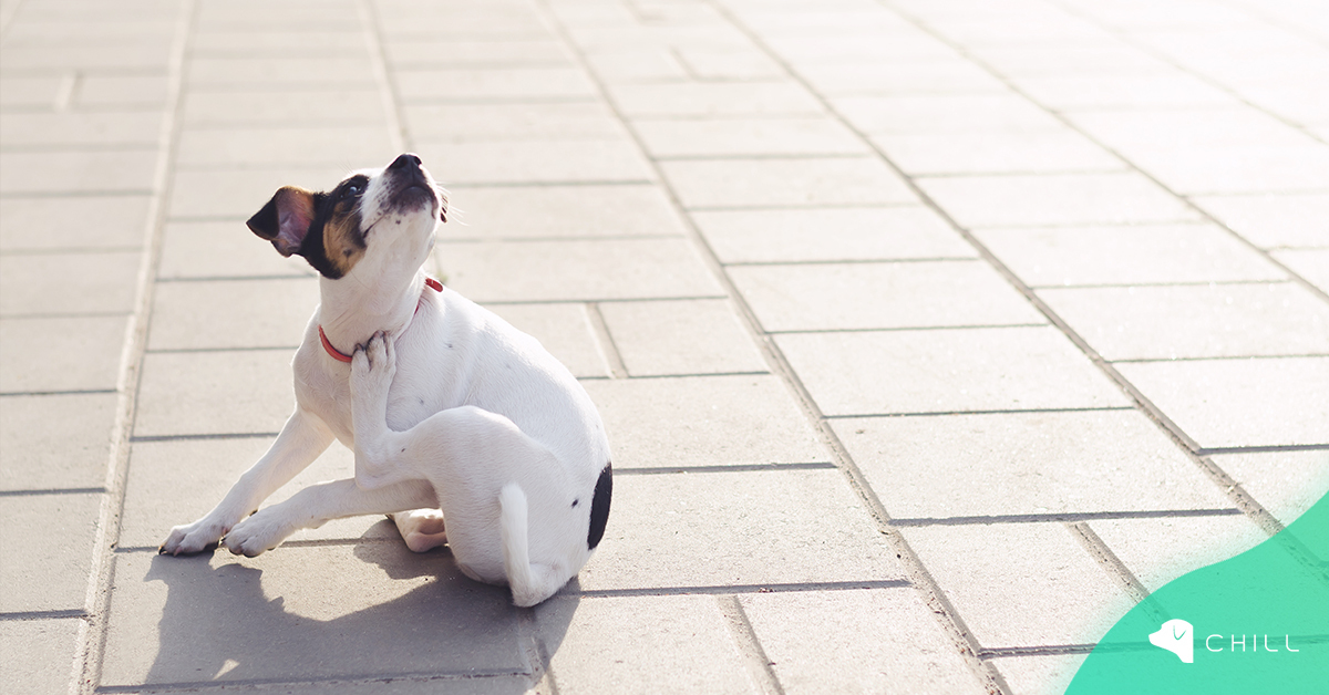 Как да защитим кучето от външни паразити?