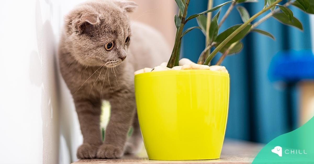 10 стайни растения, които са опасни за котето