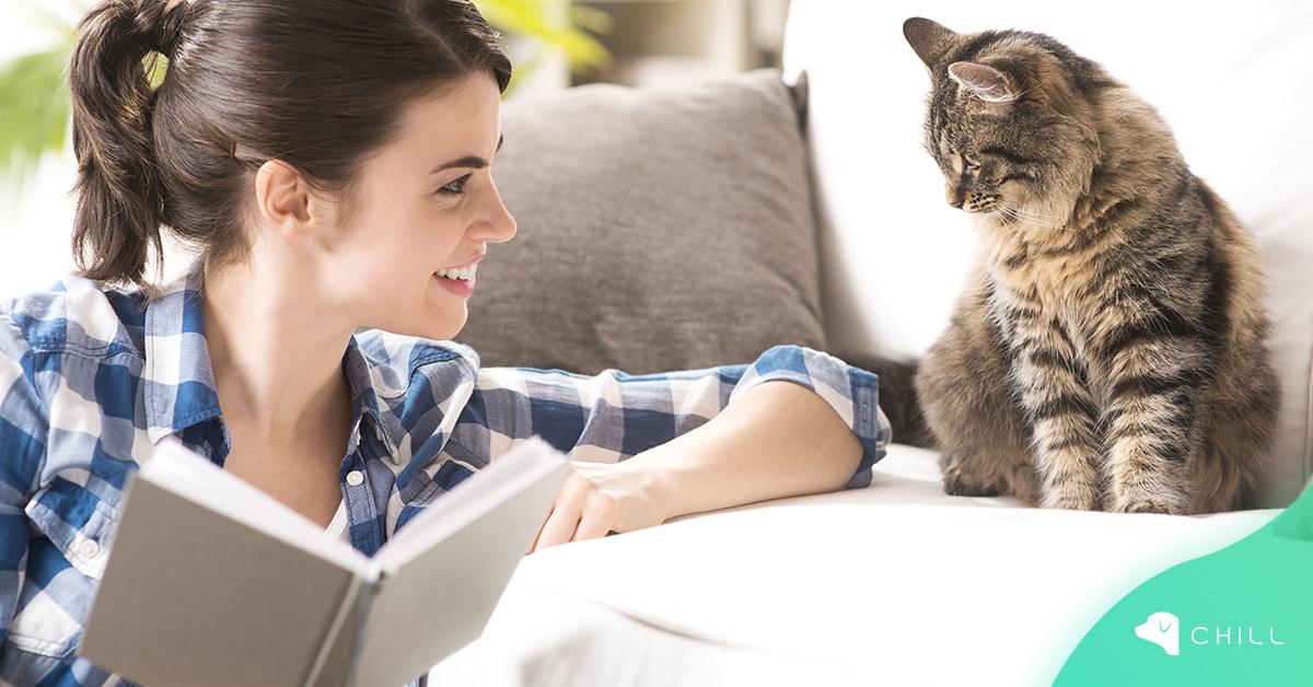 5 популярни мита за котките: истина или лъжа?