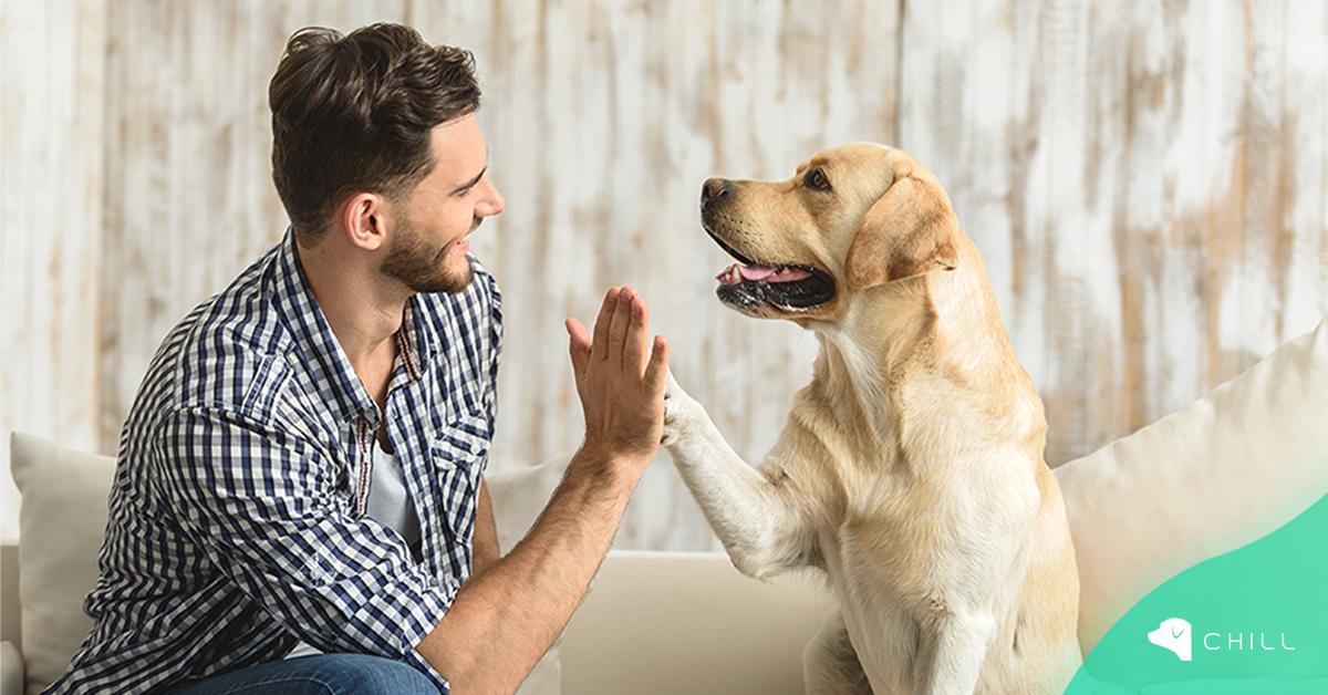 5 основни грижи за кучето, без които не може?