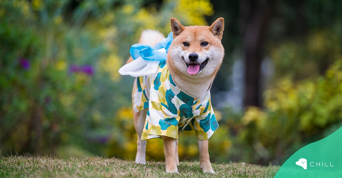 Япония – dog-friendly ресторанти и дизайнерски дрехи за кучета