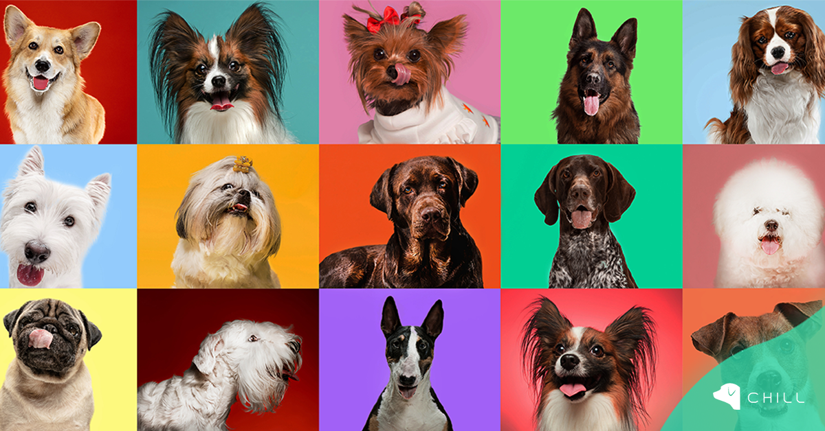 26 август – отбелязваме световен ден на кучето